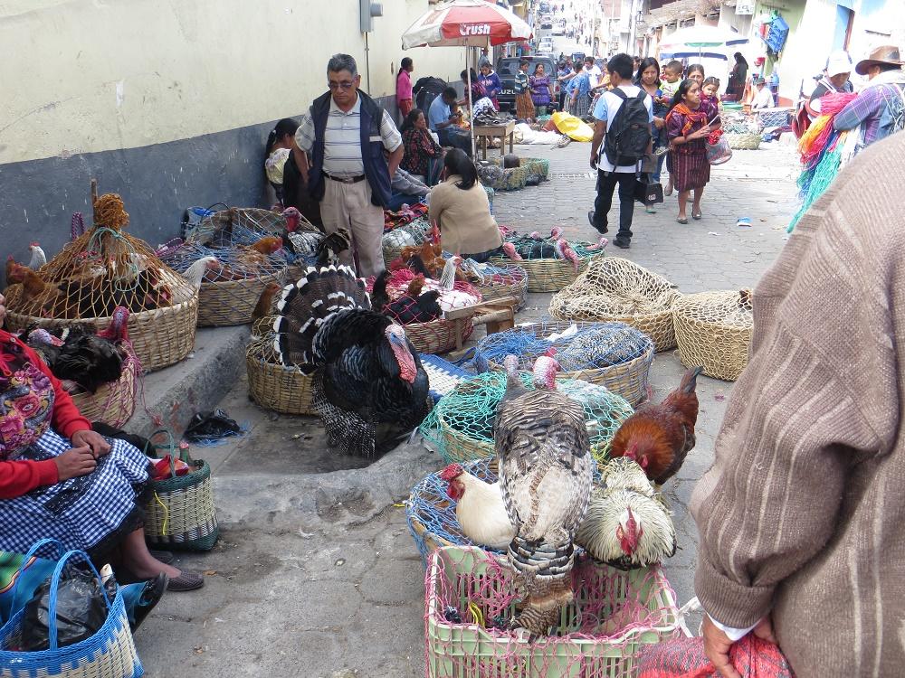 Niet voor dierenliefhebbers: zo werden de kippen, kittens, puppies en dus zelfs kalkoenen aangeboden op de markt.