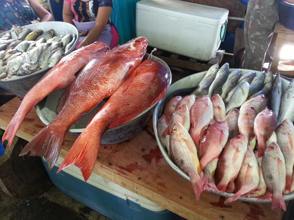Vissen vers van de boot aangeboden op de markt