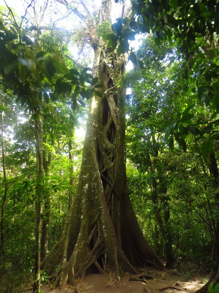 Een jungle boom!