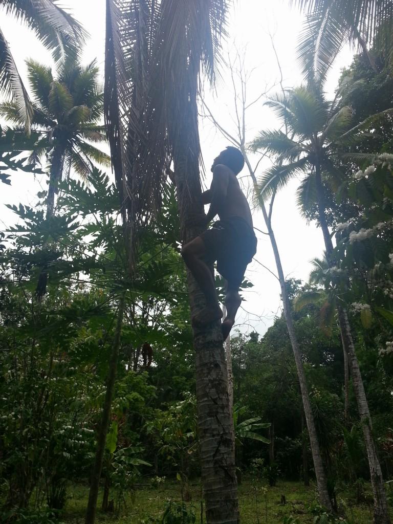 Behendig klimt Felix een kokosboom in om twee kokosnoten voor ons te scoren.