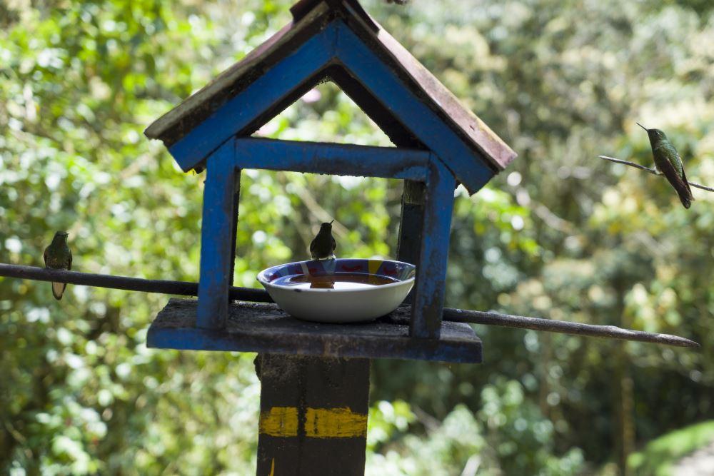 Salento biedt ook een opvang van kolibries aan. Deze komen hier rustig een chocolade drankje met u drinken.