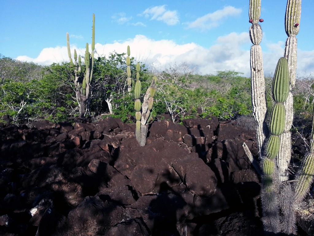Veel van het eilandse landschap zag er zo uit. Droog met cactussen en veel vulkanische stenen.