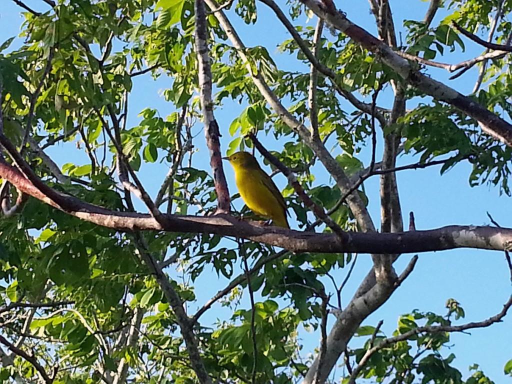 Vogelliefhebbers kijken hier ook hun ogen uit. Superveel grote en kleine vogels, allemaal andere kleuren.