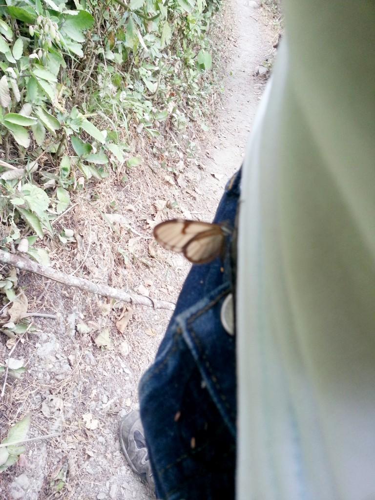 Deze vlinder wou met mij paren.