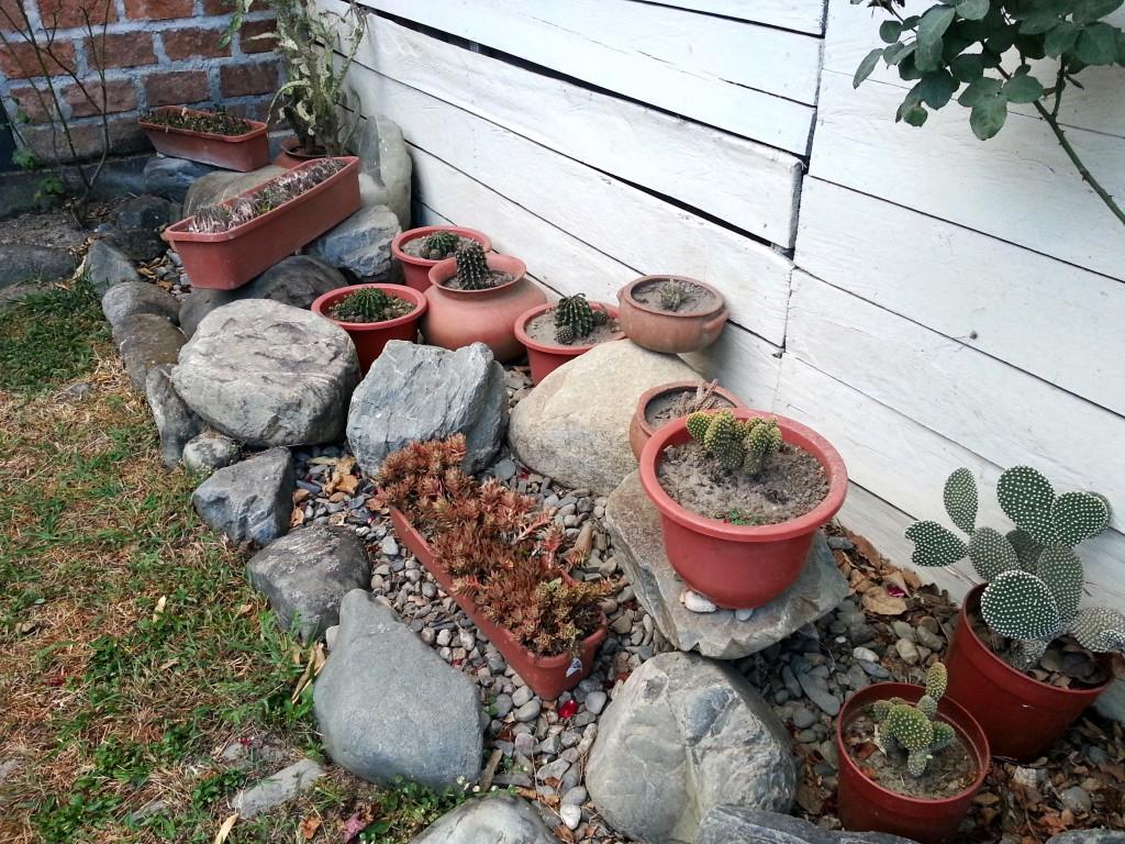 De cactussen die gekweekt werden in het meditatiecentrum. Waarschijnlijk voor oraal gebruik.