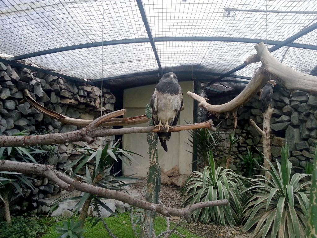 Het vogelpark had een paar mooie roofvogels opgesloten.