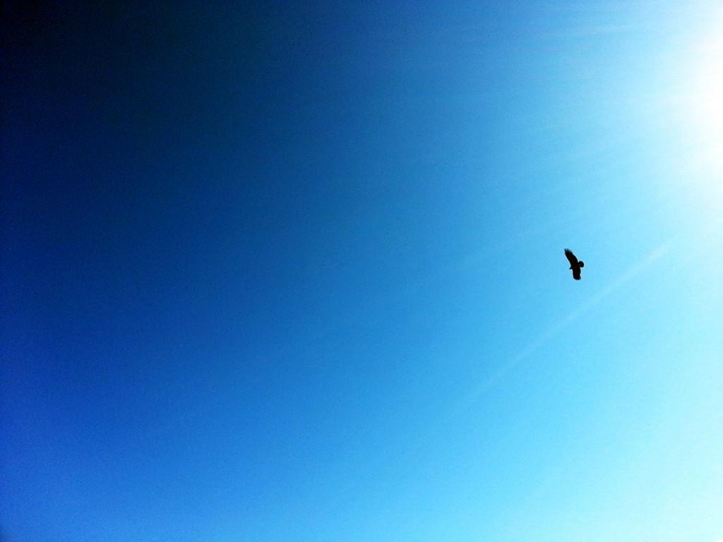 In de Colca Canyon kun je enorme Condors zien.