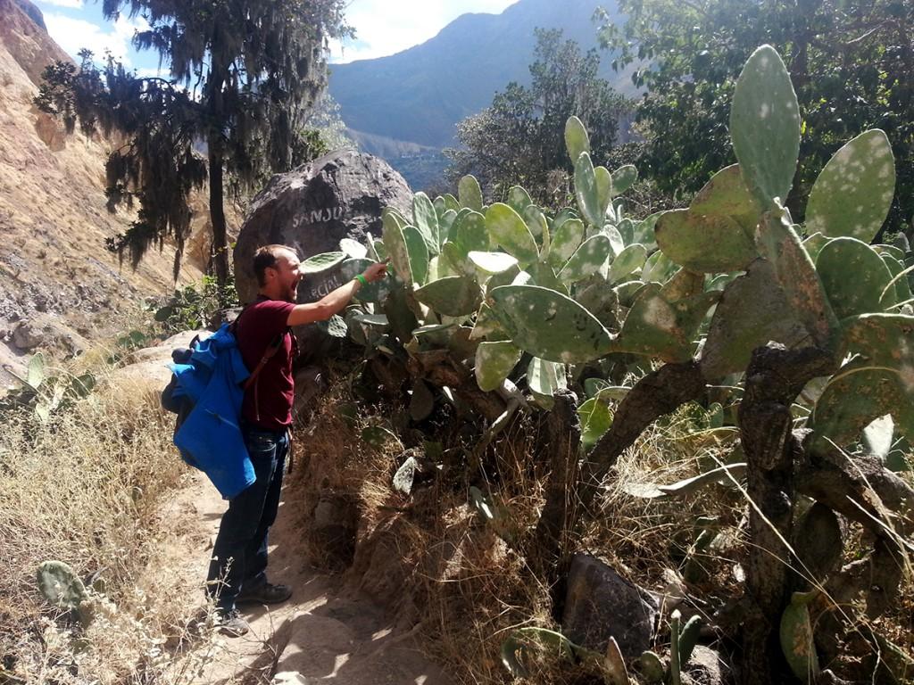 Ja Michiel, cactussen prikken nou eenmaal.