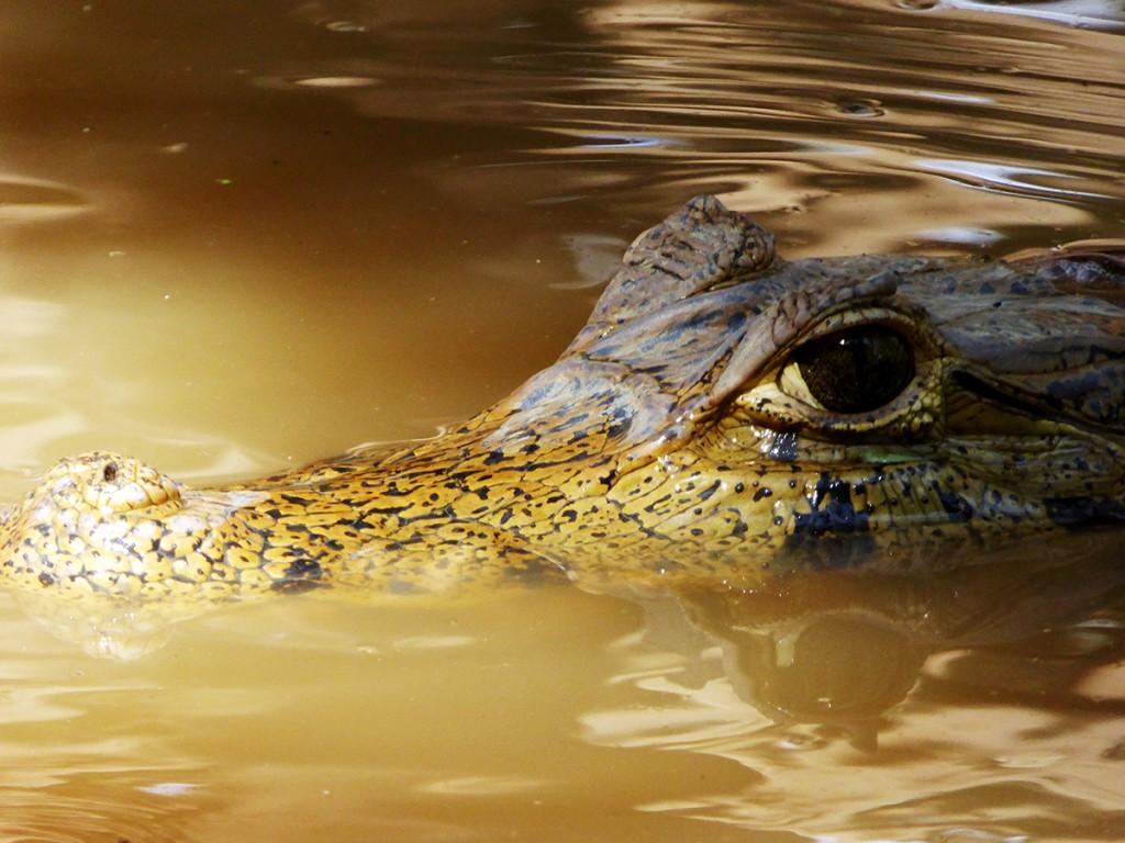 Dan zie je opeens deze ogen naast je boot.