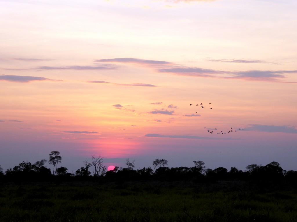 Een 'Oosterse' zonsopgang boven de jungle.