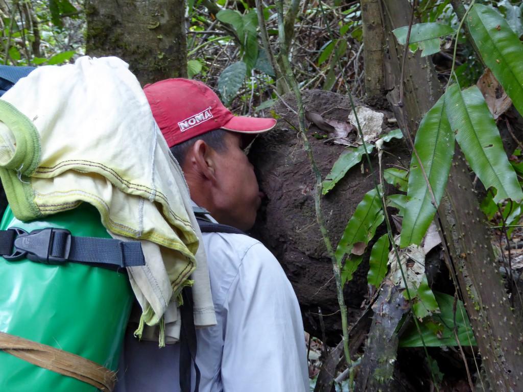 De termieten uit de foto er boven werden op deze manier door onze gids verorbert.