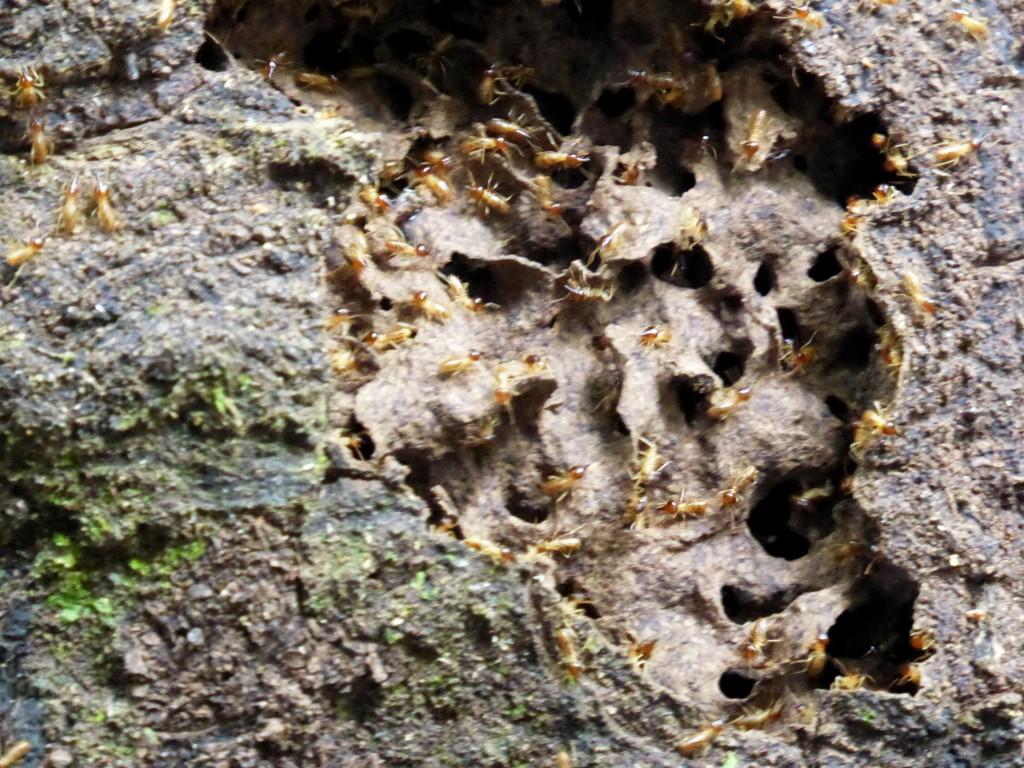 en termieten zijn hier ook volop te vinden.