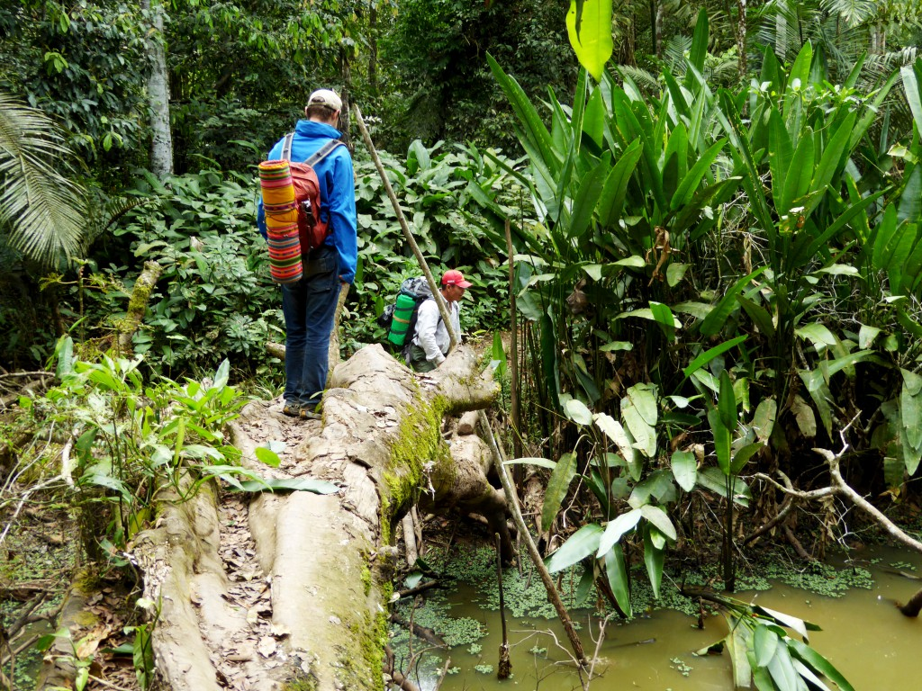 Balancerend over eeuwenoude bomen baande we ons een weg door de jungle. Ja ik voelde me wel een beetje toerist met al die kleuren.
