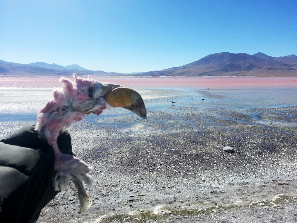 Bij dit prachtige meer, vol flamingo's vind je ook de resten van deze dieren zodra ze sterven. Waarom het ook losse lichaamsdelen zijn weet ik niet, maar ik vond dit hoofd, los, nog intact.