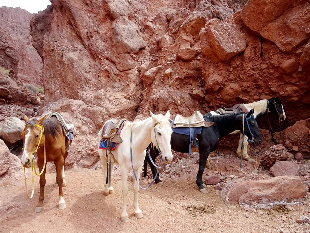 Onze paarden. De zwarte was de mijne. De bruine die van Caroline. Die sloegen dus samen op hol.