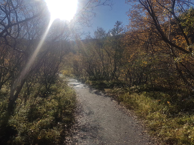 Als je je ogen dichtdoet en denkt aan een zonnige boswandeling in de herfst, dan zie je dit