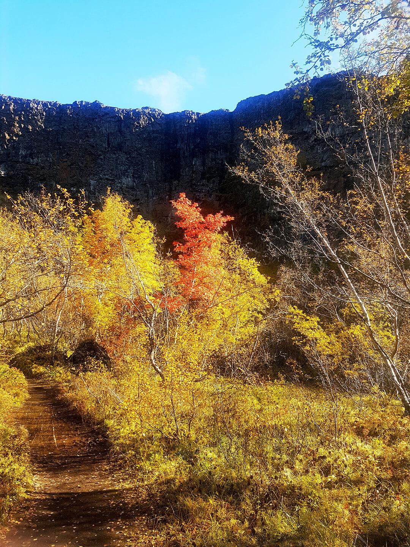 Kleurrijk bos tegen een achtergrond van rots
