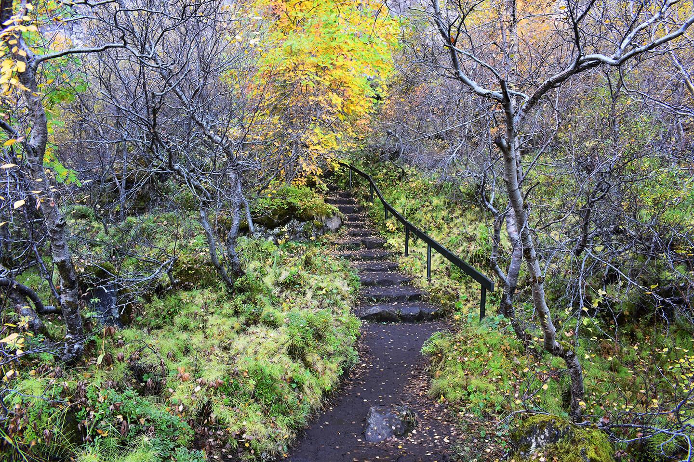 Nog een pad door het herfstbos
